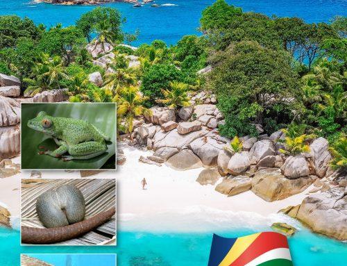 Crowdfunding-Projekt – Seychellen Naturführer – ein Buch für mehr Nachhaltigkeit