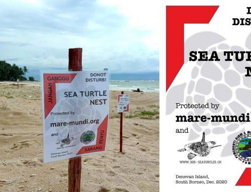Werde Schutzpate für ein Meeresschildkröten Nest in Süd Borneo!