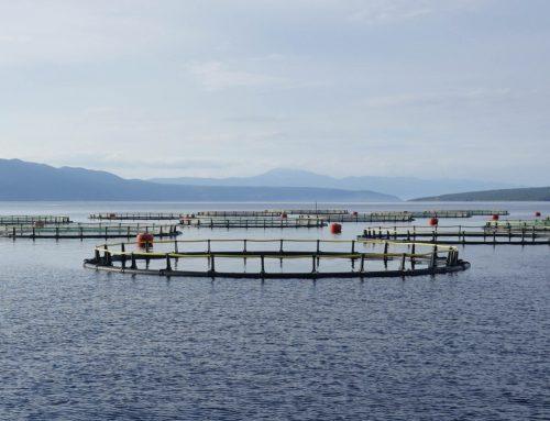 Aquakulturen und deren Folgen