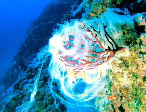 """""""Meeresrotz"""" bedroht unsere Meere. Doch was ist das eigentlich?"""
